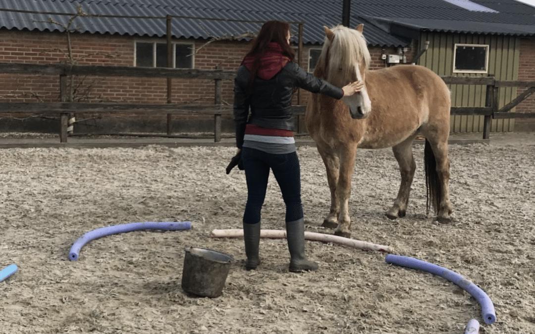 Hoe paarden je kunnen helpen met je praktijk